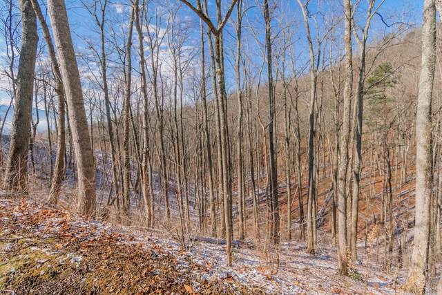 Pine Top, Gatlinburg, TN 37738 (#1145324) :: Adam Wilson Realty