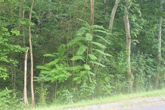 115 Lake Harbor Drive, Lenoir City, TN 37772 (#1149665) :: Shannon Foster Boline Group