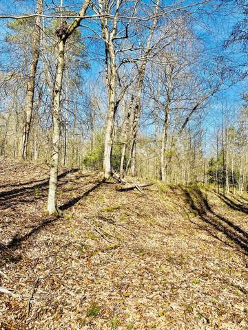 Laurel Wood Rd, New Tazewell, TN 37825 (#1150713) :: Shannon Foster Boline Group