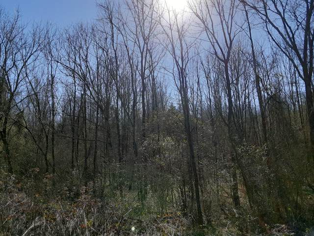 Tract 8 Indian Cave Rd, New Market, TN 37820 (MLS #1152884) :: Austin Sizemore Team