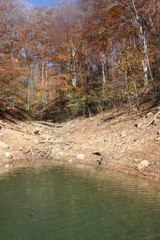 Fox Lake Lane, LaFollette, TN 37766 (MLS #1156219) :: Austin Sizemore Team