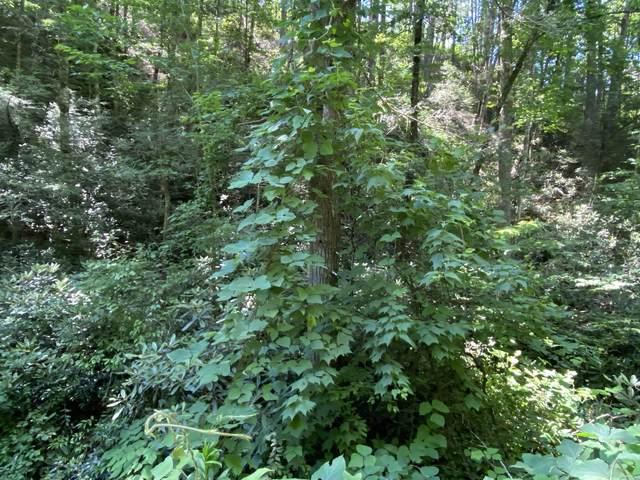 Azalea Trail Tr, Sevierville, TN 37876 (#1159771) :: Billy Houston Group