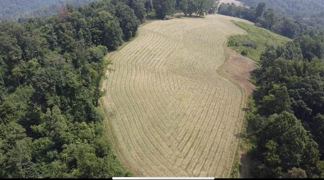 Little Sycamore Rd, Tazewell, TN 37879 (#1162007) :: Realty Executives Associates