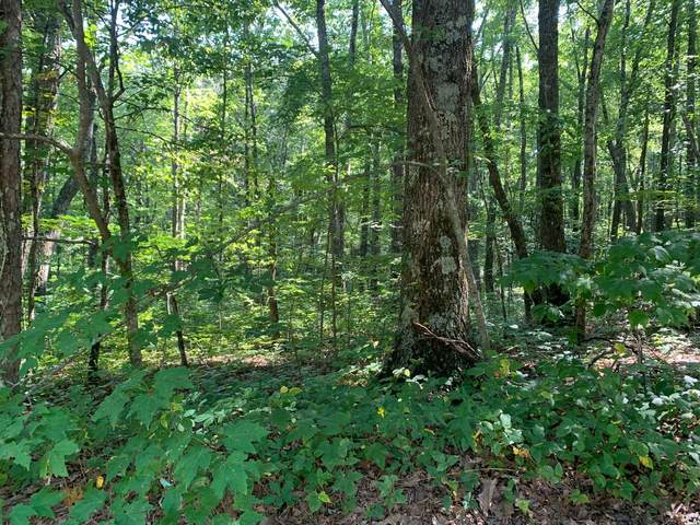 Lot 330, Renegade Mountain Pkwy, Crab Orchard, TN 37723 (#1165459) :: The Cook Team