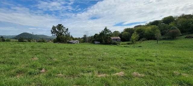 166 Meadow View Rd, Rogersville, TN 37857 (#1167930) :: Shannon Foster Boline Group