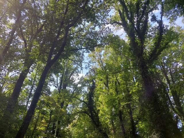 Granville Terrace, Knoxville, TN 37915 (#1169665) :: Cindy Kraus Group | Engel & Völkers Knoxville