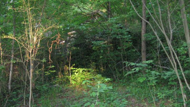 Mt Pleasant Rd, Vonore, TN 37885 (#944496) :: Billy Houston Group