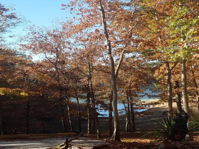 212 Toqua Lane, Mooresburg, TN 37811 (#983641) :: Billy Houston Group