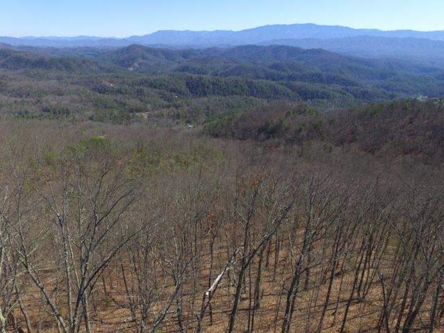 Lot 50 Shady Oaks Way, Sevierville, TN 37876 (#995192) :: Billy Houston Group