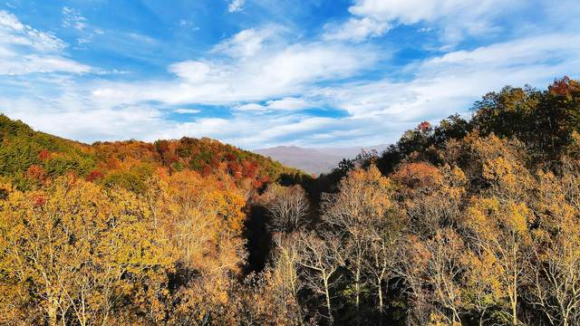 Tract 30r1 Chilhowee Mountain Tr, Maryville, TN 37803 (#1001543) :: The Cook Team