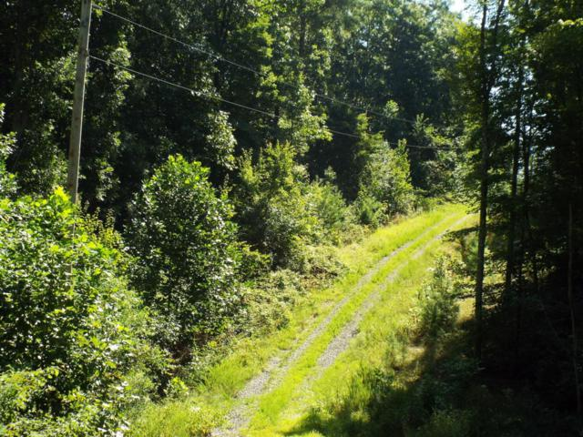 Bear Branch Rd, Wartburg, TN 37887 (#1041852) :: Billy Houston Group