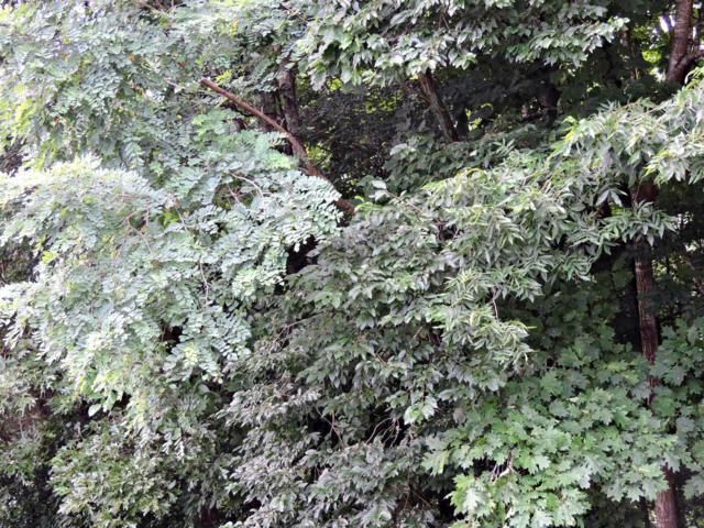 Lot 1427 Hillside Pl, Baneberry, TN 37890 (#1047524) :: CENTURY 21 Legacy