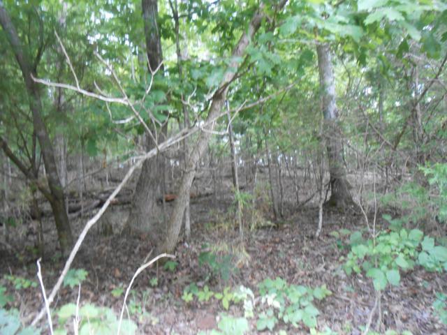 348 Dudala Way, Loudon, TN 37774 (#1053615) :: Shannon Foster Boline Group