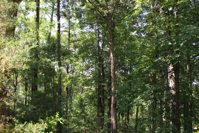 Tranquility Trail, Dandridge, TN 37725 (#1080837) :: Venture Real Estate Services, Inc.