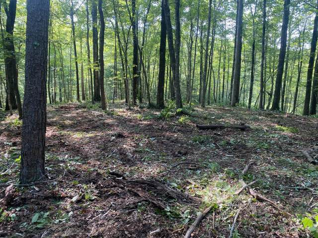0 Wilderness Trail Tr, Oneida, TN 37841 (#1126742) :: Realty Executives