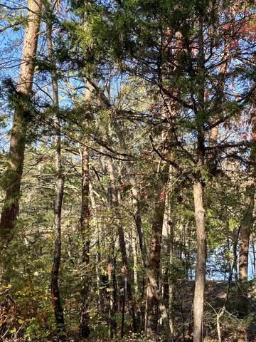 Summer Breeze Lane, New Tazewell, TN 37825 (#1133556) :: Realty Executives Associates