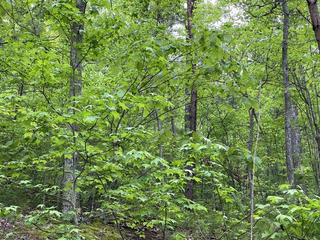 Lot 21 Elderberry Drive, Sevierville, TN 37876 (#1152050) :: The Terrell-Drager Team