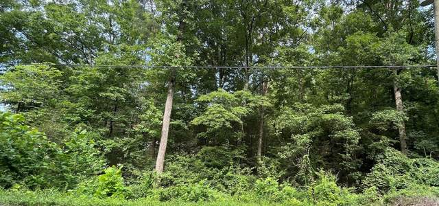 Lot 14 Alpine Drive, Sevierville, TN 37876 (#1162991) :: Shannon Foster Boline Group
