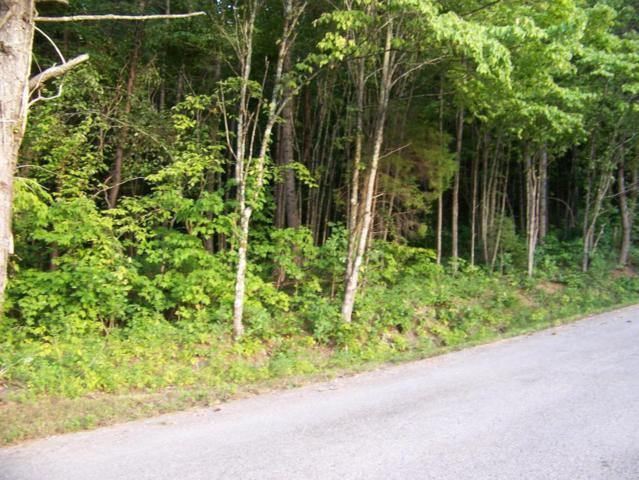 168 Bat Creek Shores Lane, Vonore, TN 37885 (#974678) :: Billy Houston Group