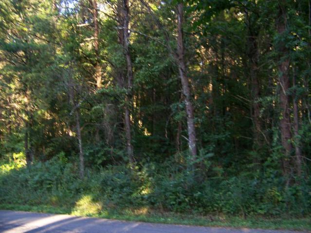 166 Bat Creek Shores Lane, Vonore, TN 37885 (#974685) :: Shannon Foster Boline Group
