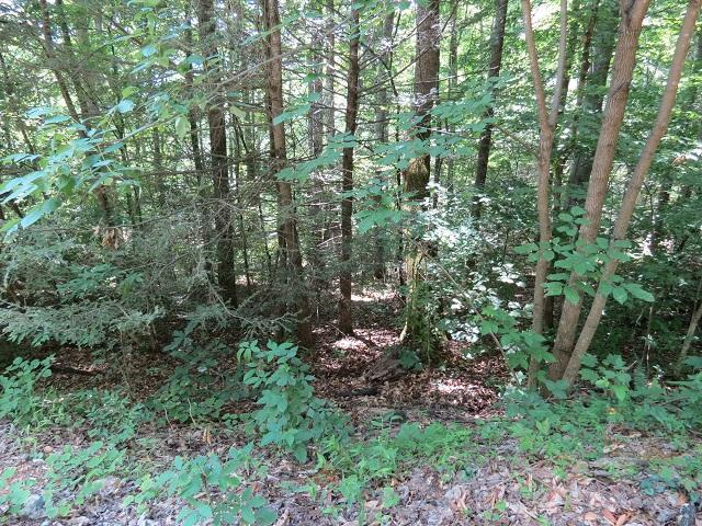 Lot 1 Greasy Cove, Cosby, TN 37722 (#1007131) :: SMOKY's Real Estate LLC