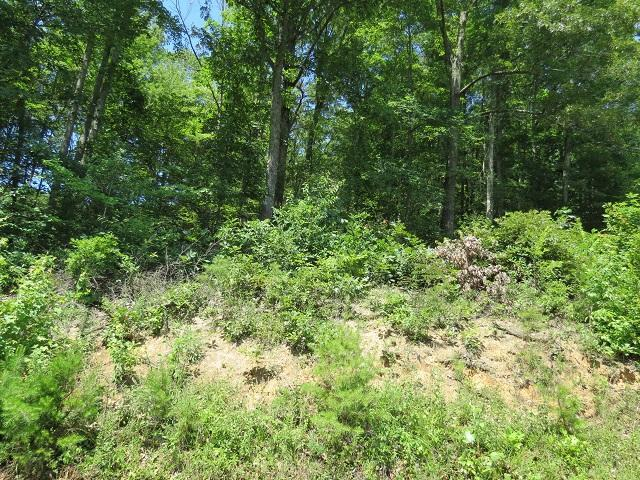 Lot 3 Greasy Cove, Cosby, TN 37722 (#1007160) :: SMOKY's Real Estate LLC