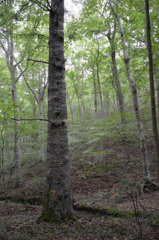 Bush Hollow Way, Sevierville, TN 37876 (#1008881) :: Billy Houston Group
