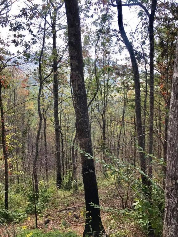 Lot 10 Vixen Run, Gatlinburg, TN 37738 (#1016991) :: The Terrell Team