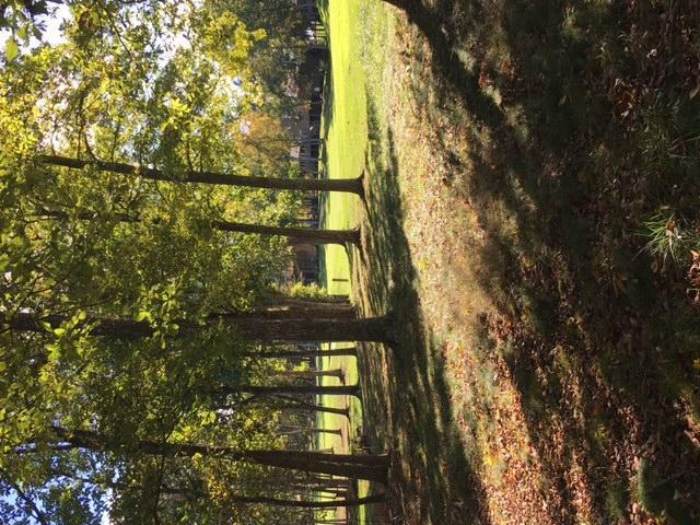 Bent Oak Lane, Fairfield Glade, TN 38558 (#1019717) :: Billy Houston Group