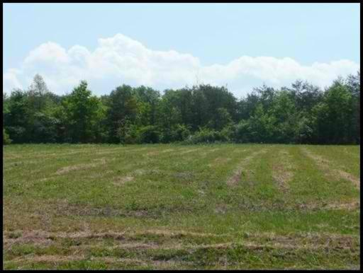 Lot #32 County Road 545, Englewood, TN 37329 (#1019948) :: Billy Houston Group