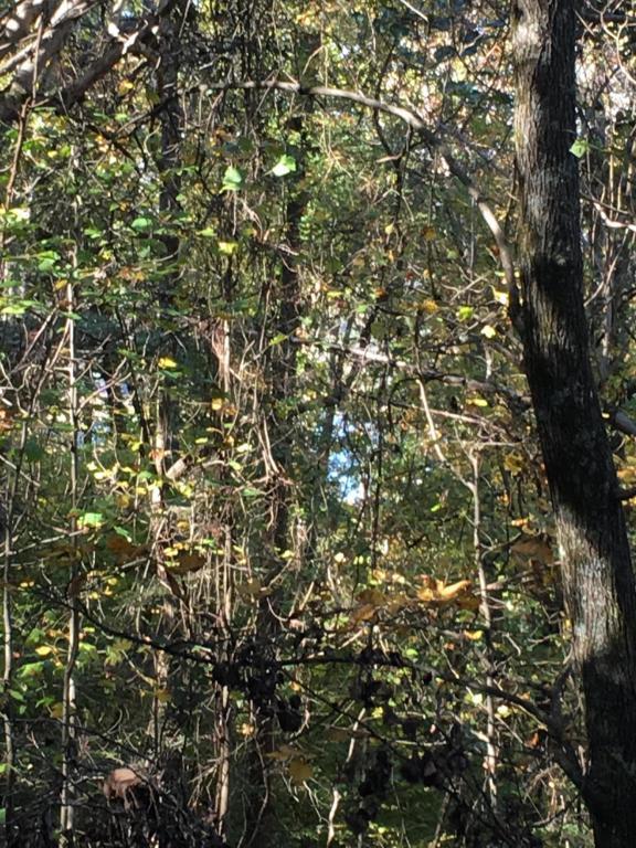 Lot 61 Overlook Trail, Maynardville, TN 37807 (#1021447) :: Billy Houston Group