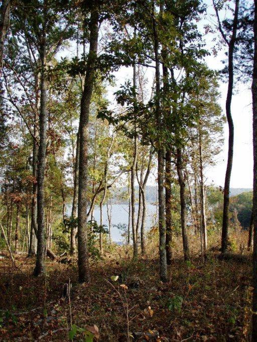 E Shore Drive, Rockwood, TN 37854 (#1026633) :: CENTURY 21 Legacy
