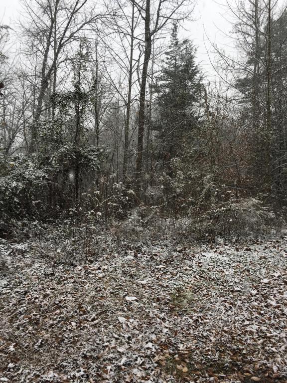 Lot 49 Piney Ridge Way, Sevierville, TN 37862 (#1028849) :: Billy Houston Group