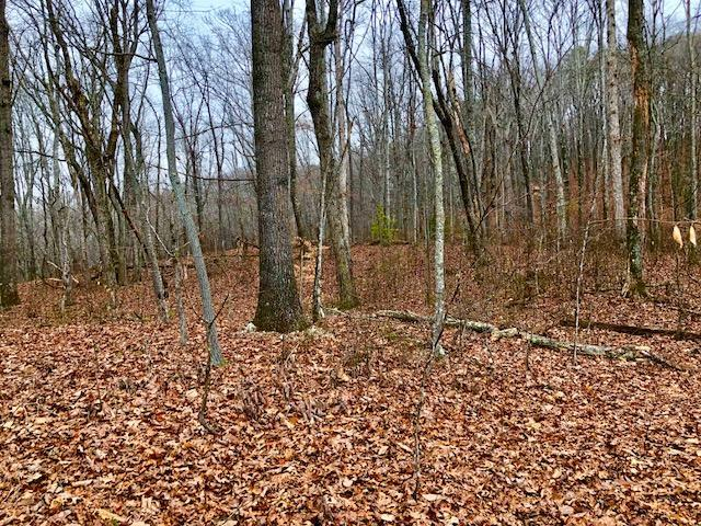 Lot 4 Sheffield Lane, Clinton, TN 37716 (#1029321) :: Billy Houston Group