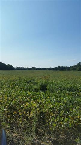 Hwy 160, Newport, TN 37821 (#1033556) :: SMOKY's Real Estate LLC
