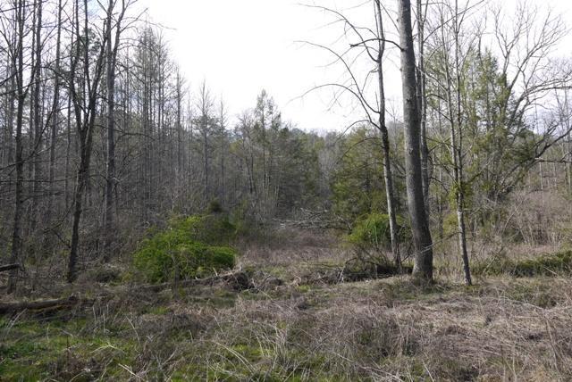 Par 019.00 Ball Hollow Rd, Cosby, TN 37722 (#1034185) :: SMOKY's Real Estate LLC