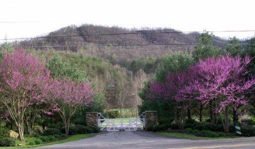 Walden Cove Way, Sevierville, TN 37862 (#1038514) :: Billy Houston Group