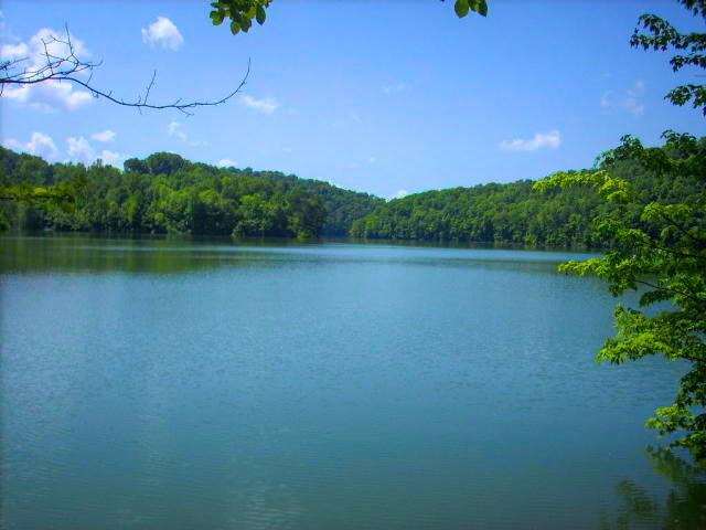 Cove Point, LaFollette, TN 37766 (#1042482) :: Billy Houston Group