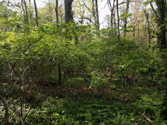 Lot 27 Crestwood Drive, Knoxville, TN 37914 (#1045261) :: Billy Houston Group