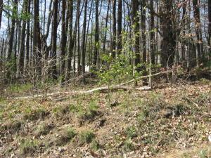 S Tennessee St, Tallassee, TN 37878 (#1045789) :: Billy Houston Group