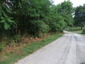 Westwood Drive, Harriman, TN 37748 (#1048639) :: Billy Houston Group