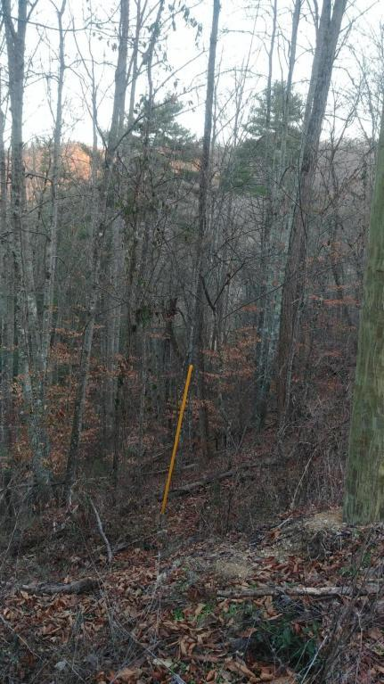 Lot 9 &10 Waldens Creek Rd Off Rd, Sevierville, TN 37862 (#1051426) :: Billy Houston Group