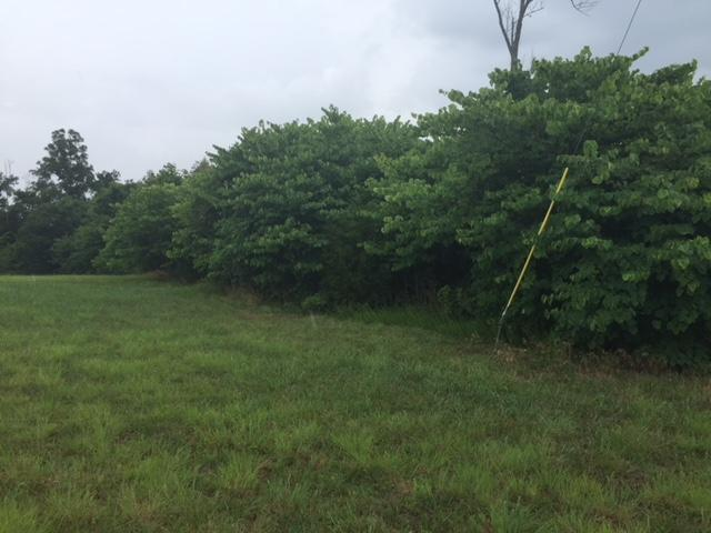 Lot 23 Panoramic Drive, Maynardville, TN 37807 (#1051961) :: Billy Houston Group