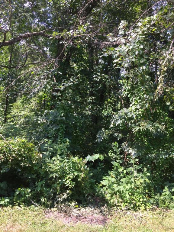 239 Chuniloti Way, Loudon, TN 37774 (#1052813) :: Shannon Foster Boline Group