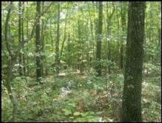 Wilderness Lane, Lot # 368, Jamestown, TN 38556 (#1053667) :: Billy Houston Group