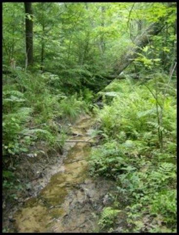 Red Oak Dr, Lot 256, Jamestown, TN 38556 (#1053748) :: Billy Houston Group