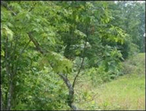 Walking Horse Dr, Lot 248, Jamestown, TN 38556 (#1053769) :: Billy Houston Group