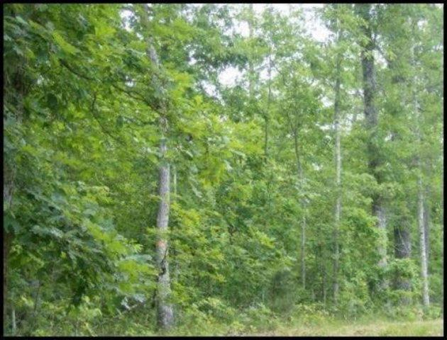 Walking Horse Drive, Lot #249, Jamestown, TN 38556 (#1053844) :: Billy Houston Group
