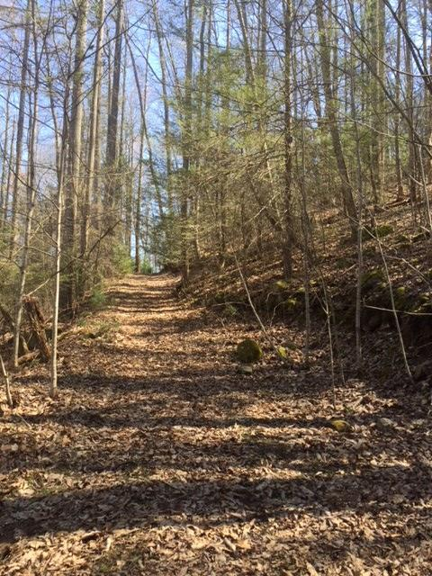 Off Holder Cemetery Rd, Tellico Plains, TN 37385 (#1061686) :: Shannon Foster Boline Group