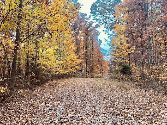 00 Wolf Branch Lane, Crawford, TN 38554 (#1062274) :: Billy Houston Group